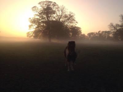 toffy fog