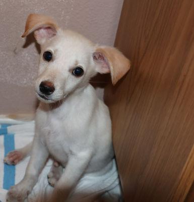 Romeo - Adopted: 7/30/2016