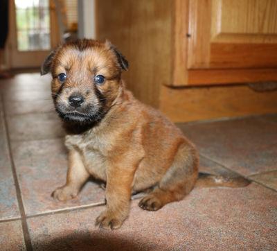 Bear - Adopted 12/31/2016