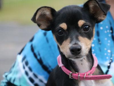Alana - Adopted 12/10/2016