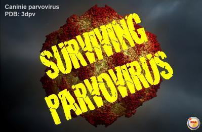 Surviving Parvovirus