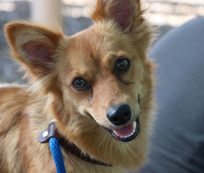 Foxy - Adopted 9/9/2017