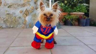 Superman! aka Max