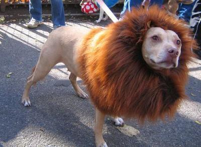 Roger the Lion