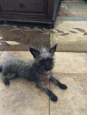 Tumbleweed - Adopted 9/9/2017