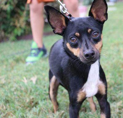 AJ - Adopted 9/16/2017
