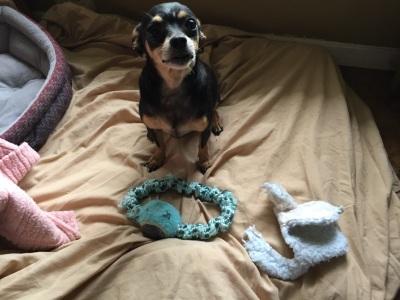 Finnegan - Adopted 8/29/2017