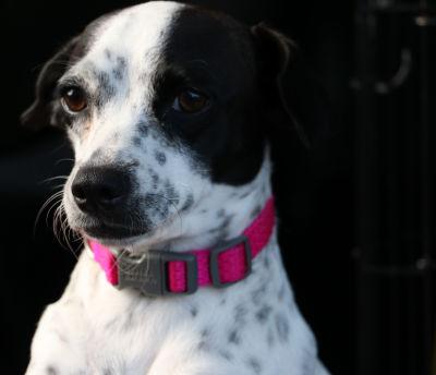 Gigi - Adopted 2/5/2018