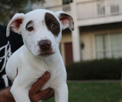 Hank - Adopted 2/9/2018