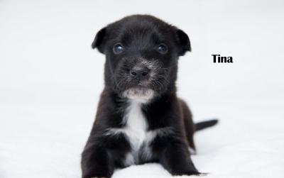 Tina - Adopted 4/5/2018