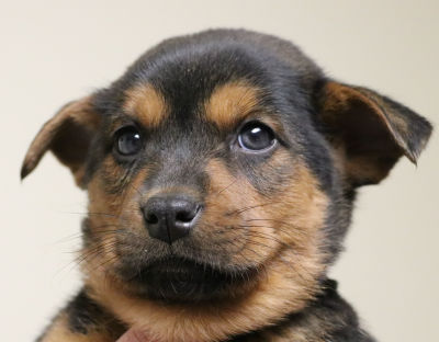 Boise - Adopted 4/26/2018