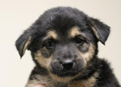 Salem - Adopted 4/26/2018