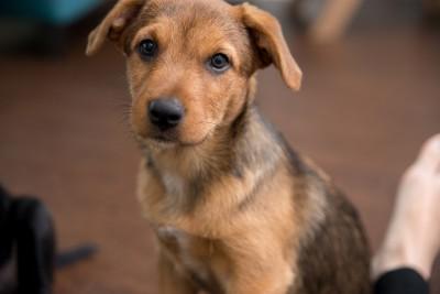 Alfie - Adopted 4/21/2018