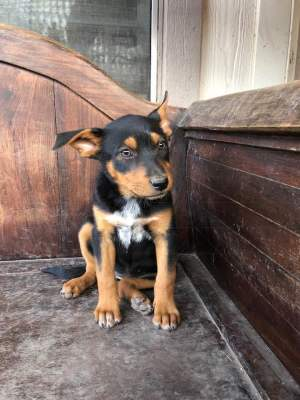Juneau - Adopted 4/26/2018