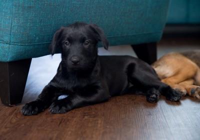 Shenzi - Adopted 5/25/2018