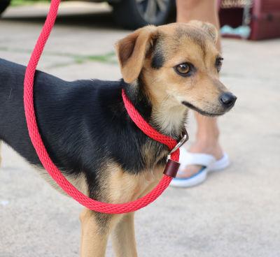 Linda - Adopted 9/8/2018