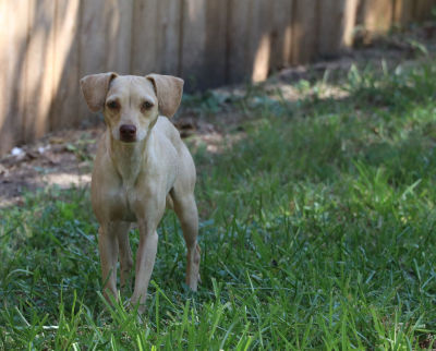 Helena - Adopted 8/15/2018