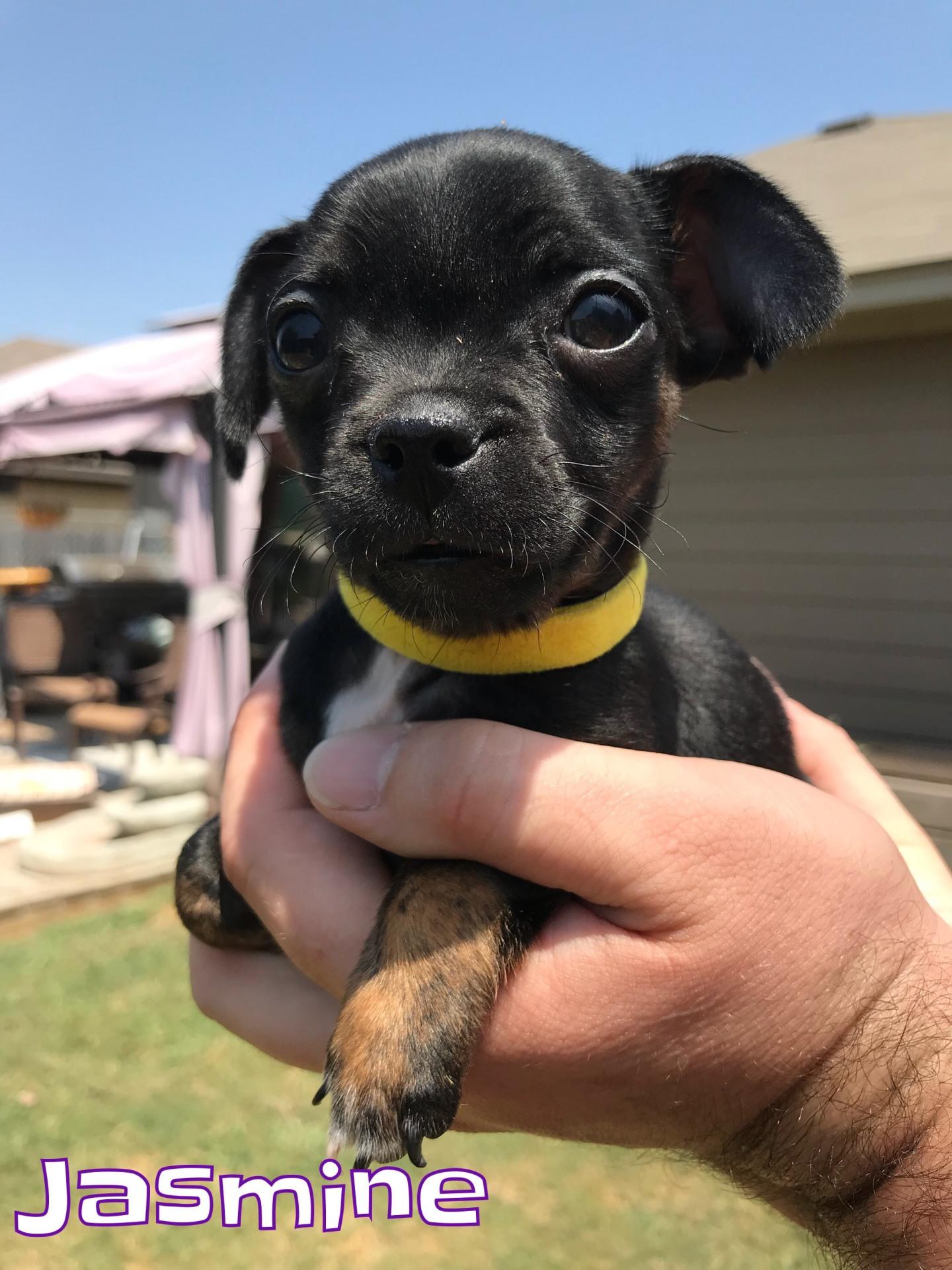 Jasmine - Adopted 10/10/2018