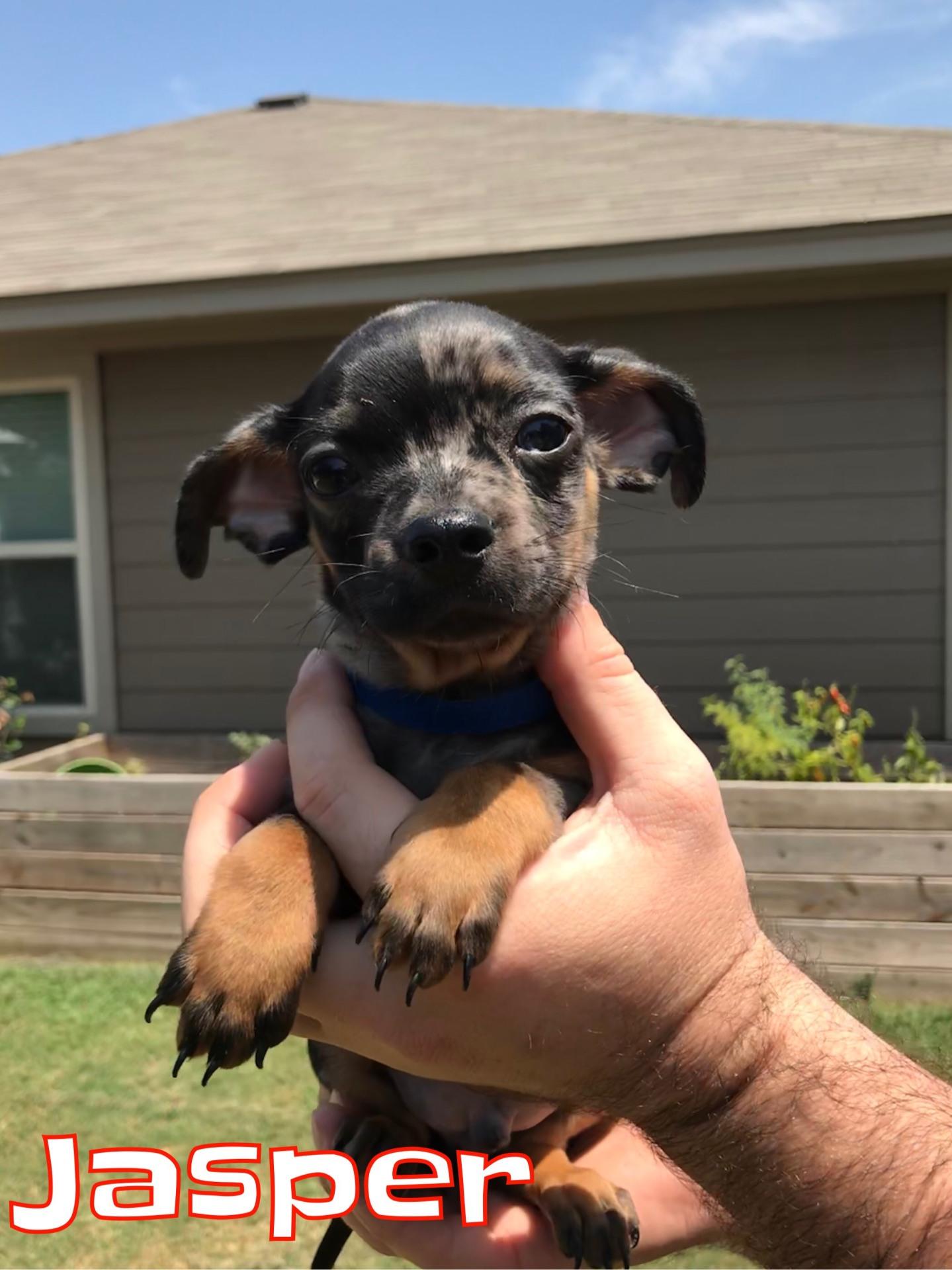 Jasper - Adopted 9/18/2018