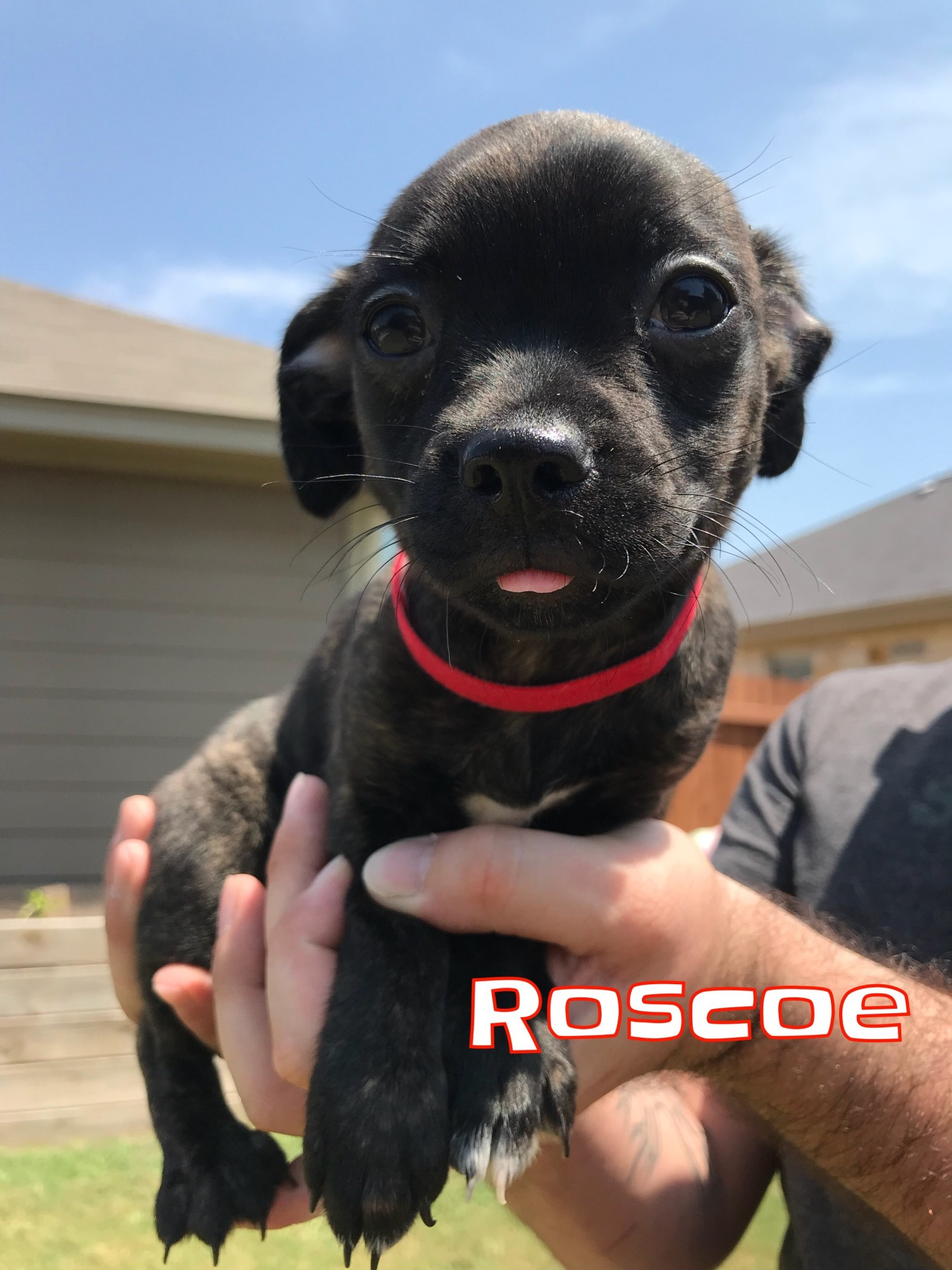Roscoe - Adopted 10/6/2018