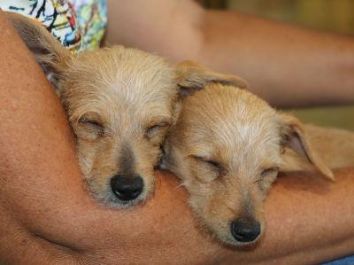 Diasy and Maisy