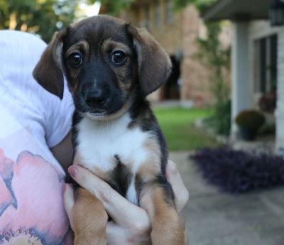 Hunter - Adopted 11/24/2018