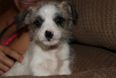 Harvoni (Pup 2)