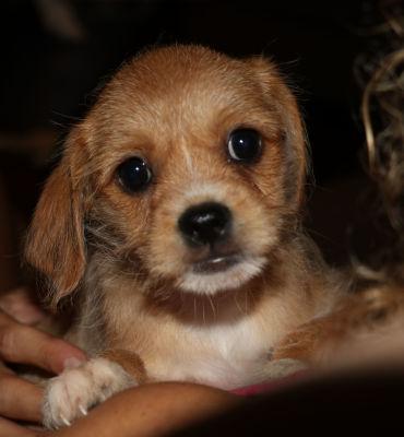 Otezla (Pup 4)