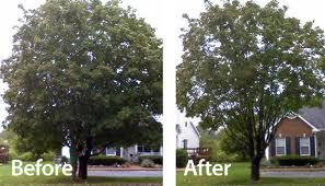 Tree Trimming befor and after Cincinnati Ohio