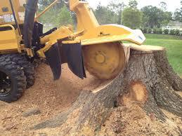 Stump Removal Service