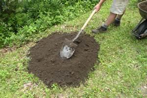 Stump removal plant grass