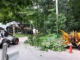 Tree removal Dayton Ohio
