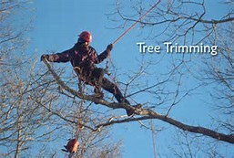 Tree service Cincinnati Ohio trimming