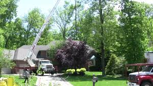 Tree removal Columbus Ohio