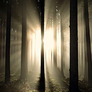 The fog rolls in - Dementia Part 1