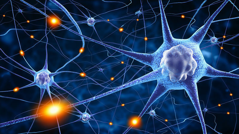 Rewire your Brain for a Happier Life: How Neuroplasticity Can Help Your Mood
