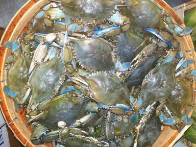 Fresh Blue Crabs!