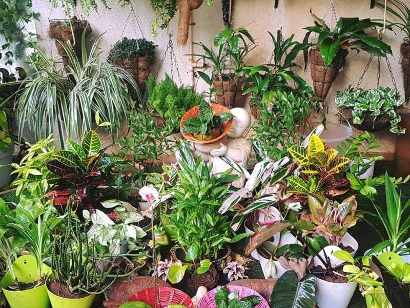 How to Choose Healthy Plants for Your House or Garden
