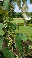 Magnanini Winery