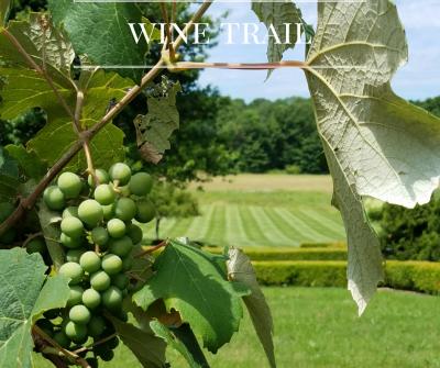 Hudson Valley Wine