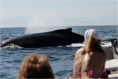 Whale watching Banderas Bay