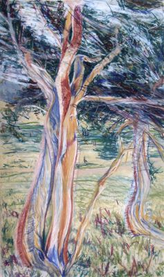 Tree of Life Study