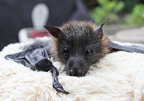 Bats health warning