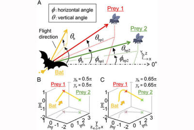 Bats can plan their kills two insects ahead