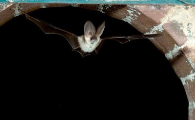 Image credit: Hugh Clark/ Bat Conservation Trust
