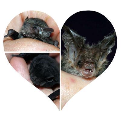 L'Anse Area Schools build houses for bats