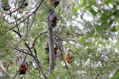 Bat mortality no longer sustainable, global review finds