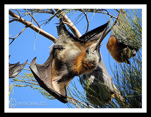 Bats in the Bay: Water Garden night work starts
