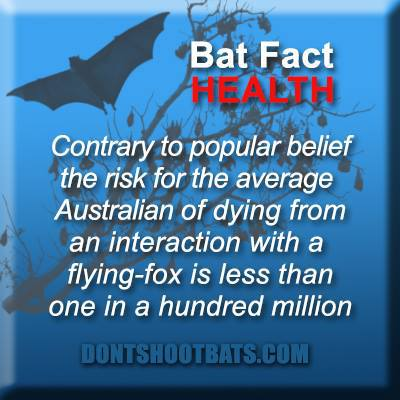Bat Fact - Health