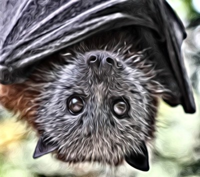 Flying-foxes make life a misery